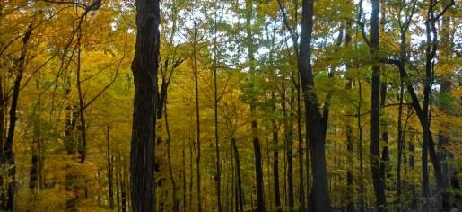 Foliage15