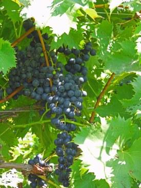 Rockbridge Winery