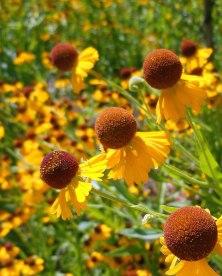 Lewis Ginter Botanical Gardens