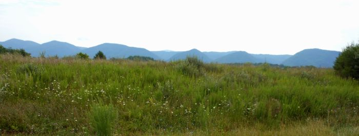 Buena Vista vista