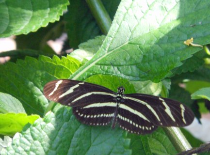 Butterfly 6