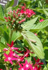 Flower and Mantis