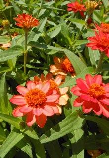 Flower Mystery 2