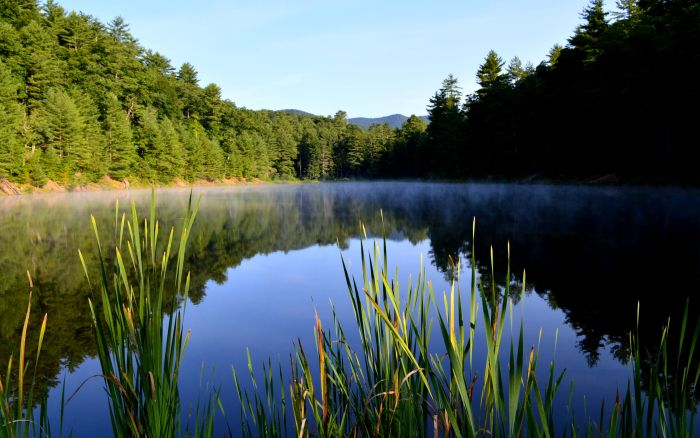 Braley's Pond