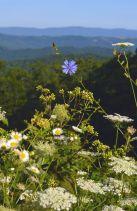 Mountain Wildflowers