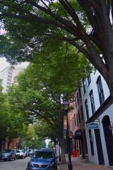 Shockoe - trees & buildings