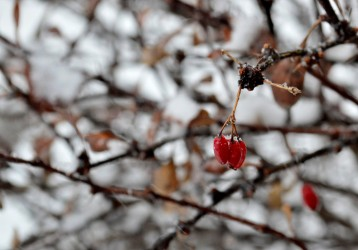 Snow Day Flora